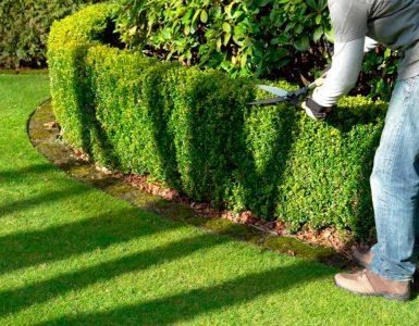 живая изгородь уход и обрезка, стрижка живой изгороди, живая изгородь сад