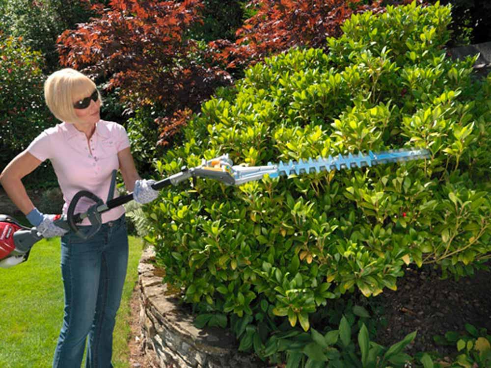 Стрижка лиственных изгородей, живая изгородь стрижка и уход