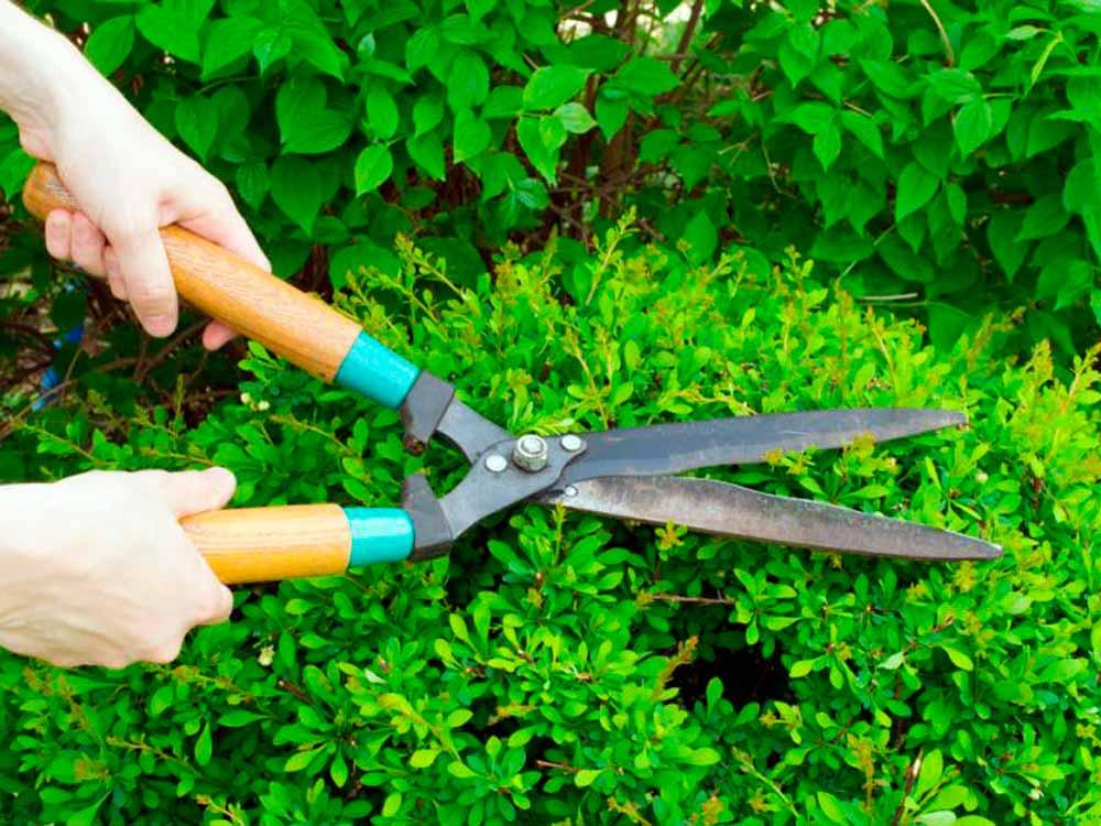 живая изгородь уход и обрезка, стрижка живой изгороди