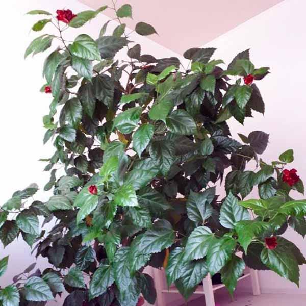 Зимний сад, цветы для зимнего сада в квартире, обустройство зимнего сада